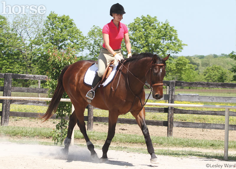 English horse and rider at a trot