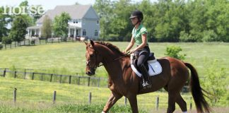 Horse and rider trotting