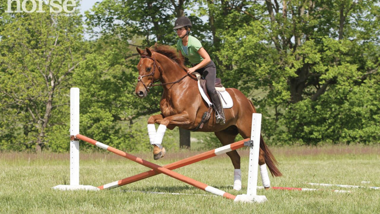 When Can A Young Horse Start Jumping Horse Illustrated