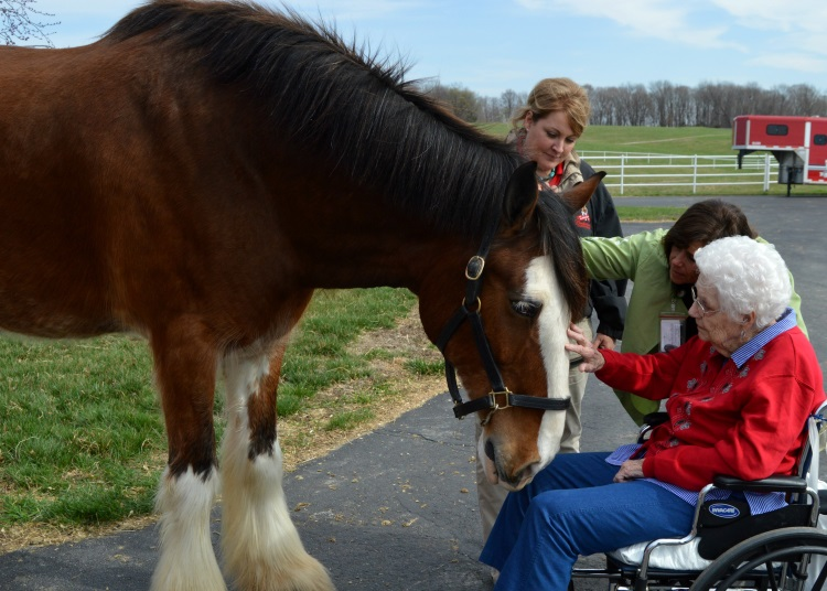Crossroads Hospice Clydesdale