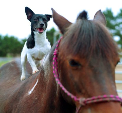 Dog riding a pony