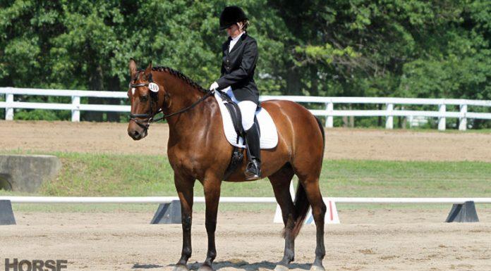 Dressage horse halt