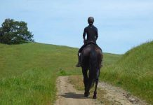 Dressage on the Trail