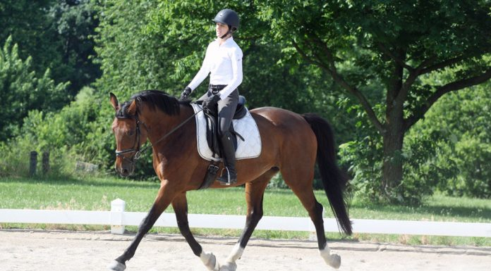 Dressage rider at a schooling show