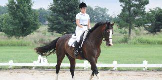 Dressage horse trotting