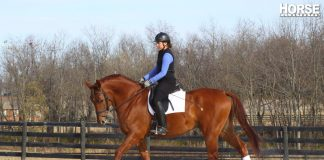 Schooling a dressage horse at the walk