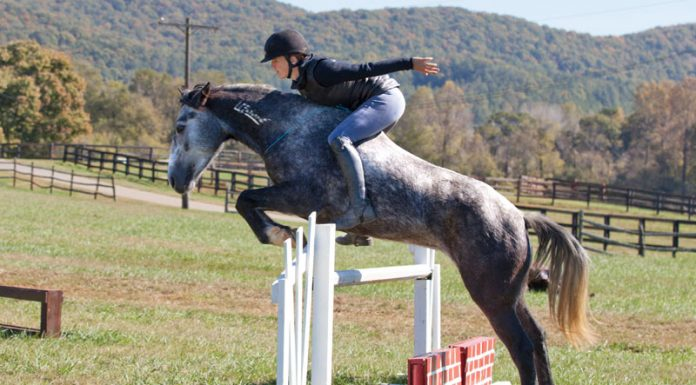 Elisa Wallace riding her Mustang, Hwin, over a jump without a bridle.