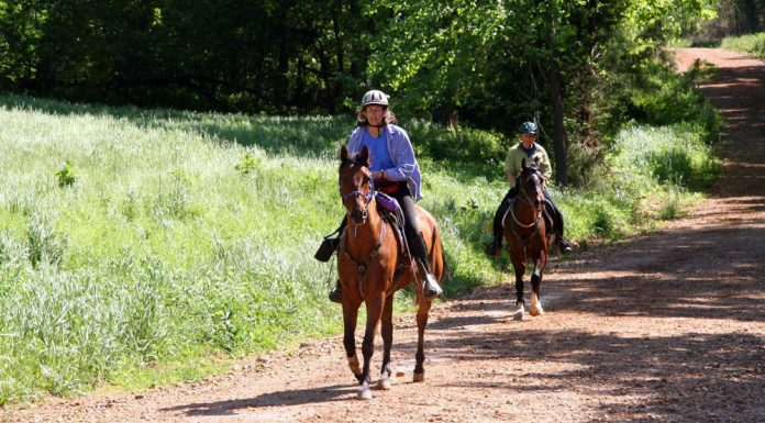 Two horseback riders on the trail in an endurance ride