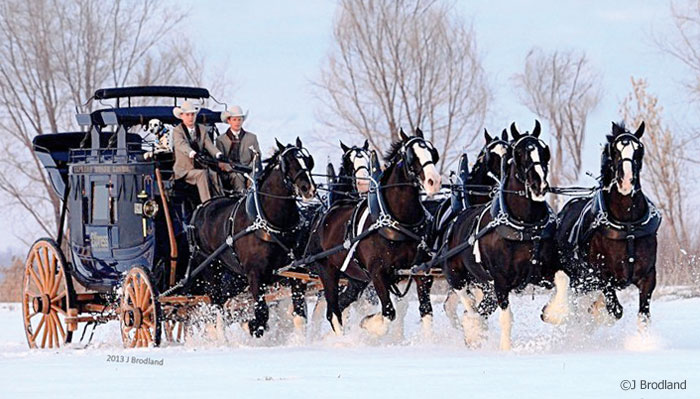 Express Clydesdales