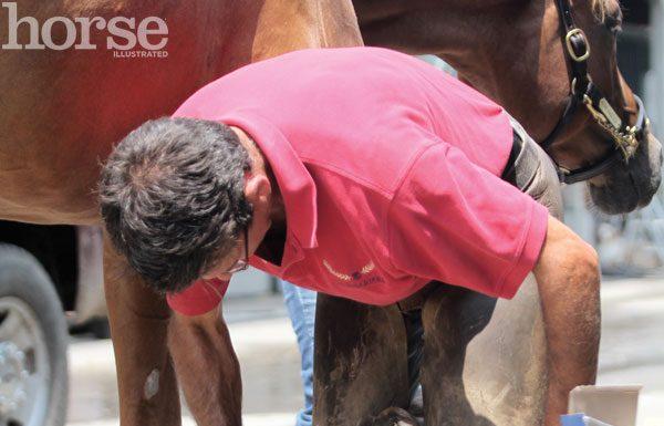 Farrier rasping a hoof