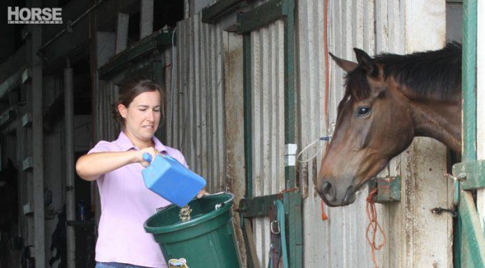 Feeding grain to a horse
