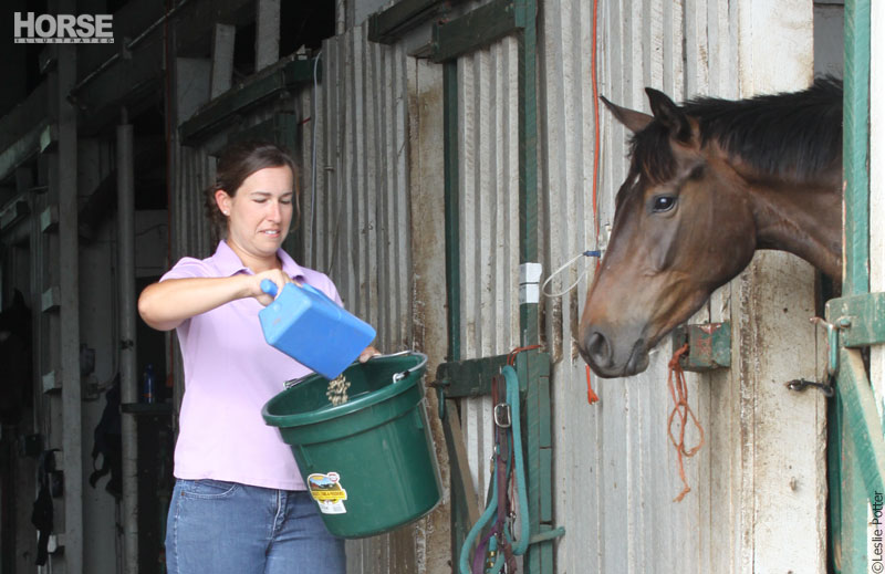 Feeding grain to a horse