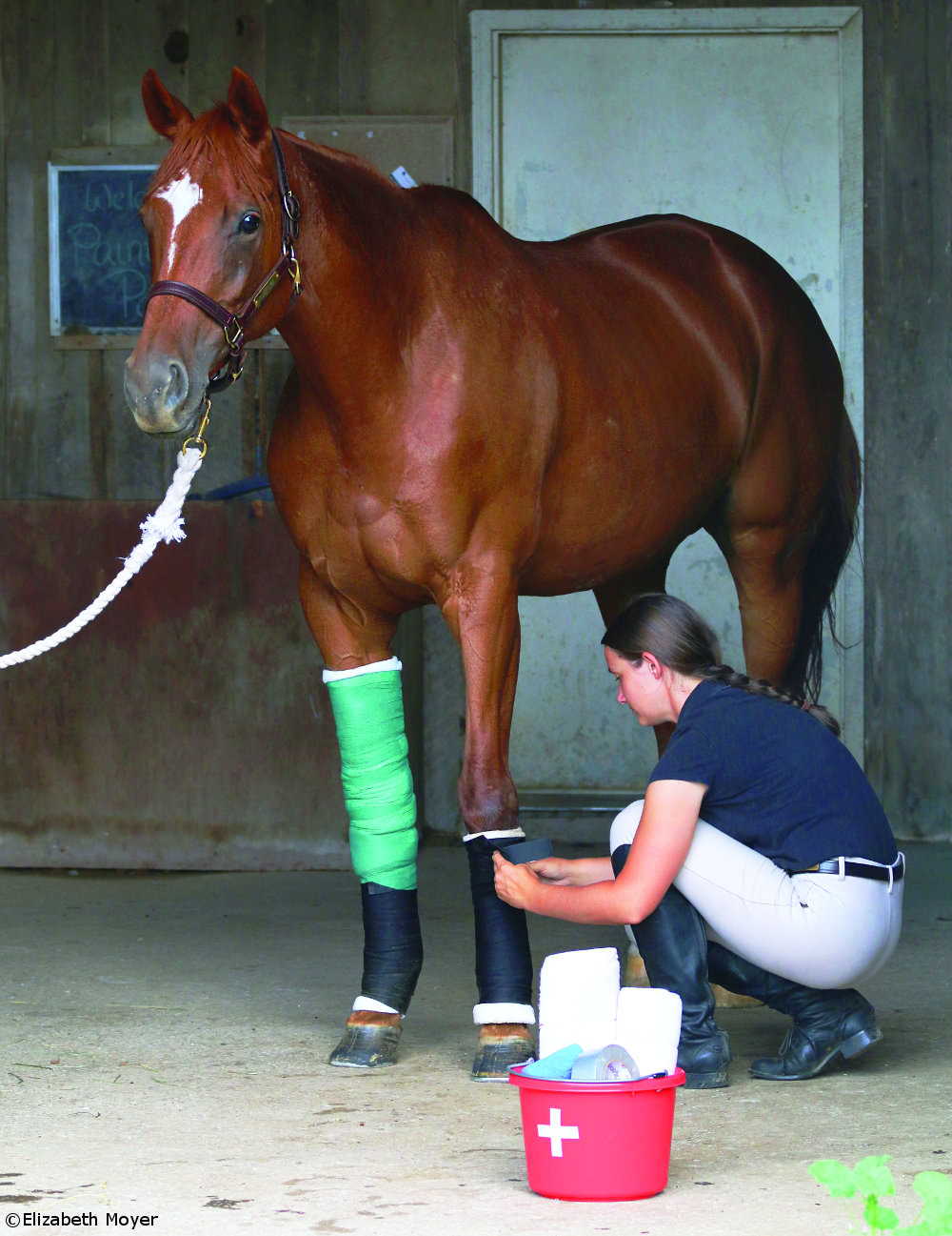 Bandaging a horse's legs