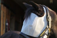 Horse in a fly mask