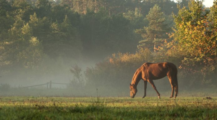 Horse grazing in the morning sun