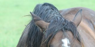 Grumpy horse