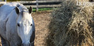Horse with a round bale of hay