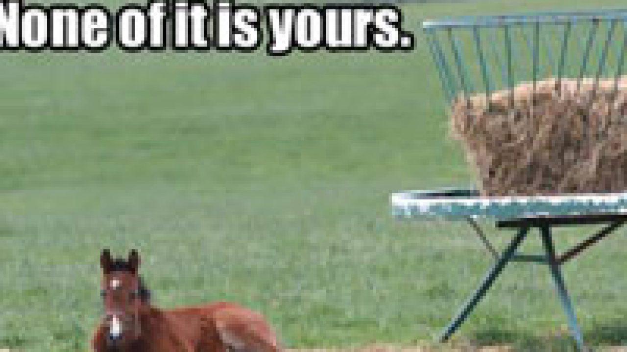 Horse Memes Horse Illustrated