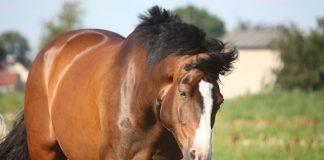 Horse shaking his head