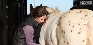 Listening to a horse's heartbeat
