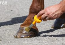 Applying Hoof Dressing