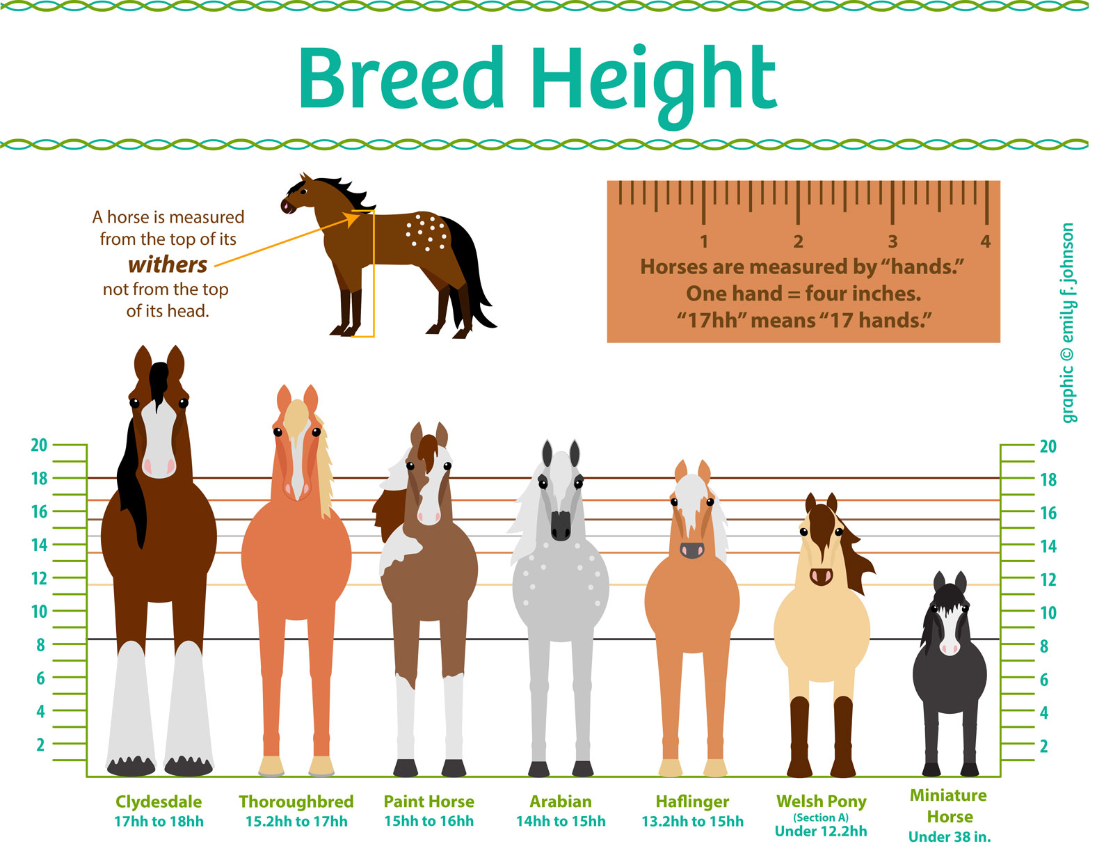 Horse Height Chart - Horse Illustrated