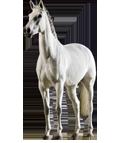 Horse Img