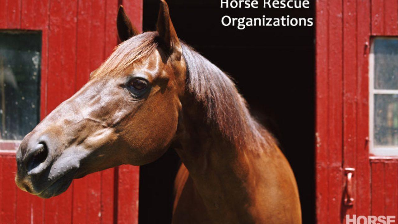 Horse Rescue Organizations Horse Illustrated
