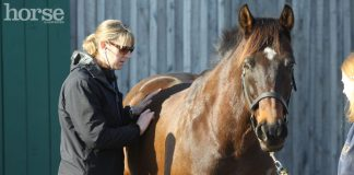 Vet examining a horse