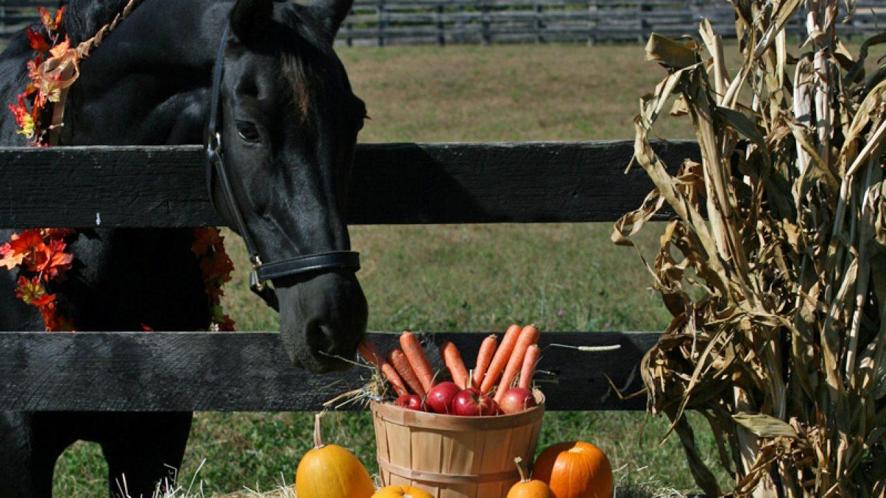 Pumpkin Treats For Horses Horse Illustrated
