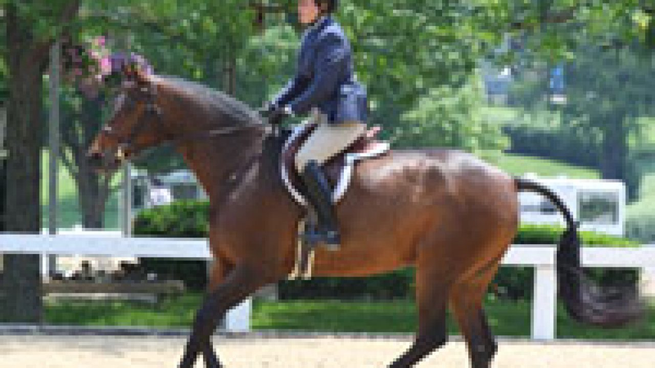 Teaching Your Off Track Standardbred To Canter Horse Illustrated