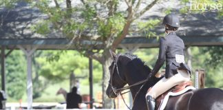 Rider at a horse show