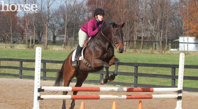 Horse and rider schooling over fences with traffic cone fillers