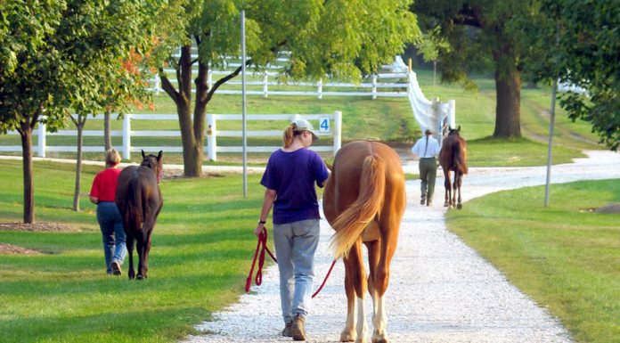 People leading horses at a horse farm
