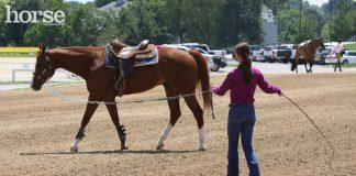 Longeing a horse