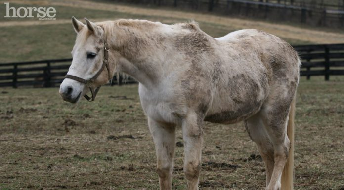 Gray horse covered in mud