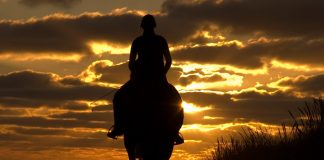 Silhouette of a horse and rider on the beach at sunset