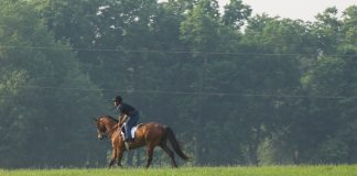 Conditioning a racehorse