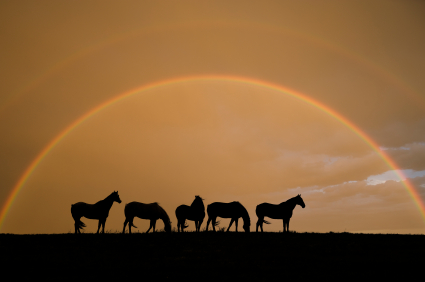 Horse silhouettes under a rainbow
