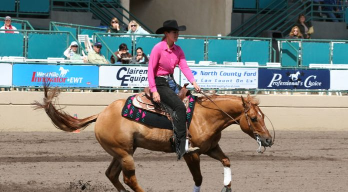 Reining horse performing a spin