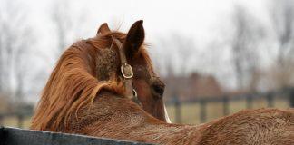Horse at the Kentucky Equine Adoption Center