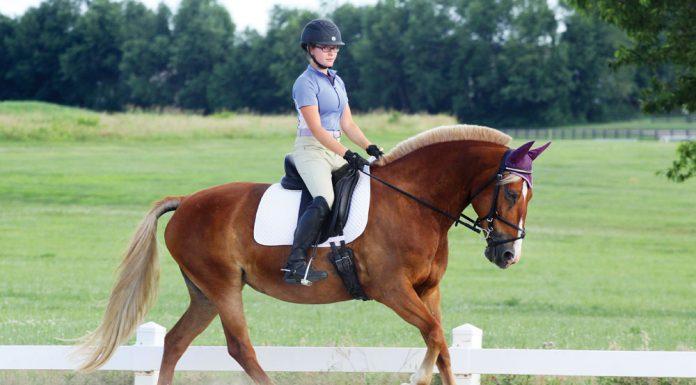 Pony dressage schooling