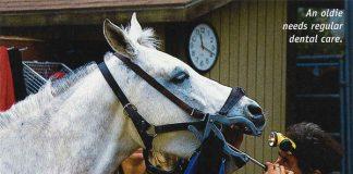 Senior Horse Dental Exam