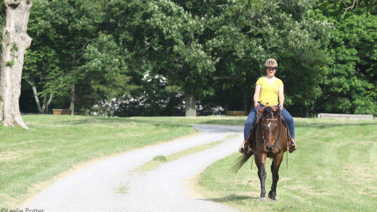 Exercise For Senior Horses Horse Illustrated