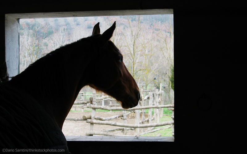 Horse looking out a stall window