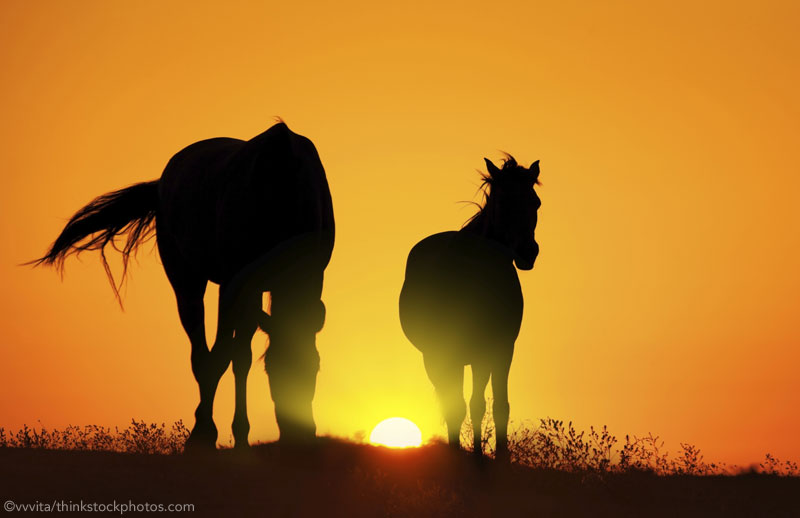 Two horses silhouetted at sunset - Summertime Horse Health Problems