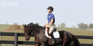 Teaching a Standardbred to canter