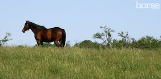 Thoroughbred horse in a field