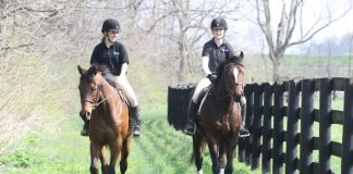 Thoroughbreds trail riding