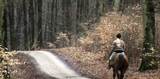 Riding a horse in the woods